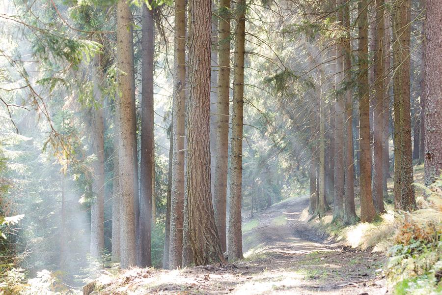 """фото """"Золотая осень"""" метки: пейзаж, путешествия, Европа, горы, лес, осень"""