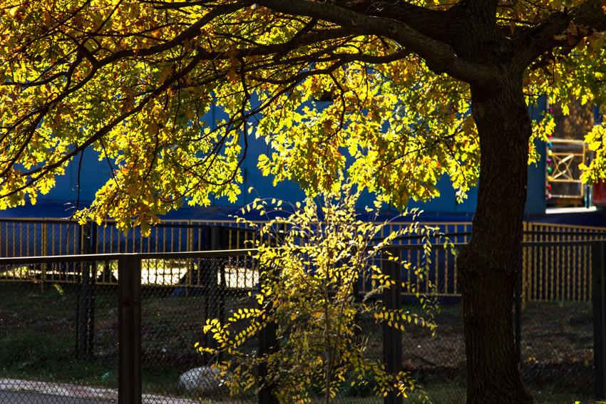 "фото ""Осенние..."" метки: пейзаж, природа,"