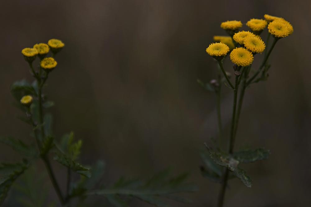 """фото """"Осенние..."""" метки: природа,"""