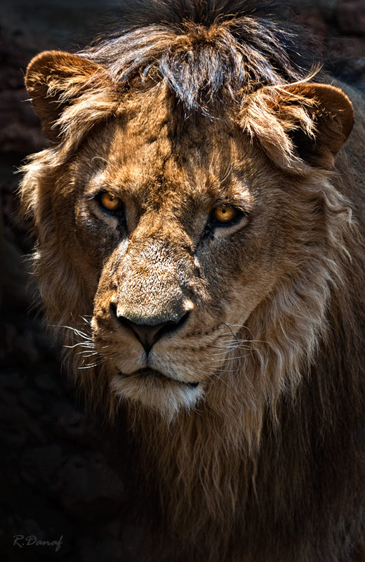 """photo """"The king"""" tags: nature, Africa, wild animals"""