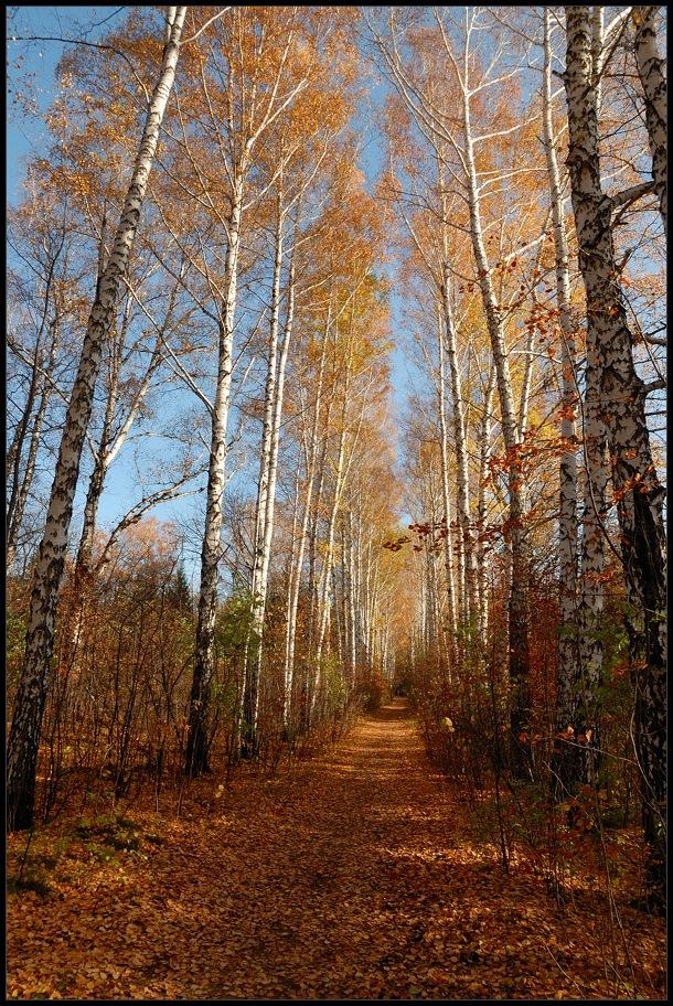 """фото """"Аллея"""" метки: пейзаж, лес, осень"""