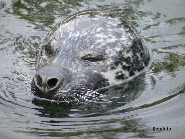 "photo ""Seal"" tags: nature, Europe"
