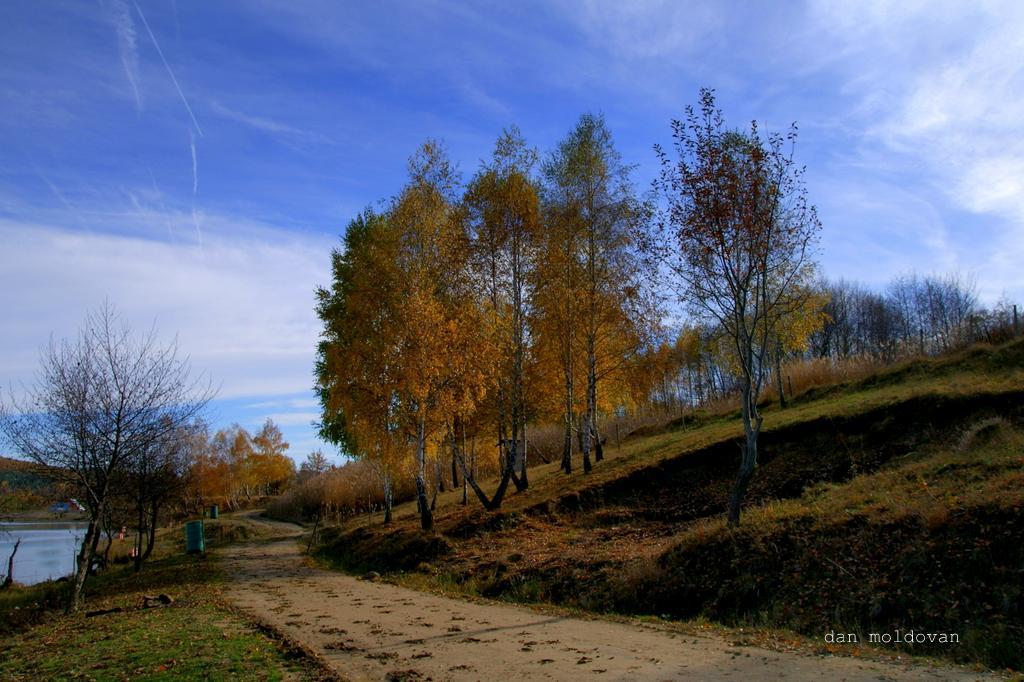 "photo ""mesteceni"" tags: landscape, autumn, forest, lumina"
