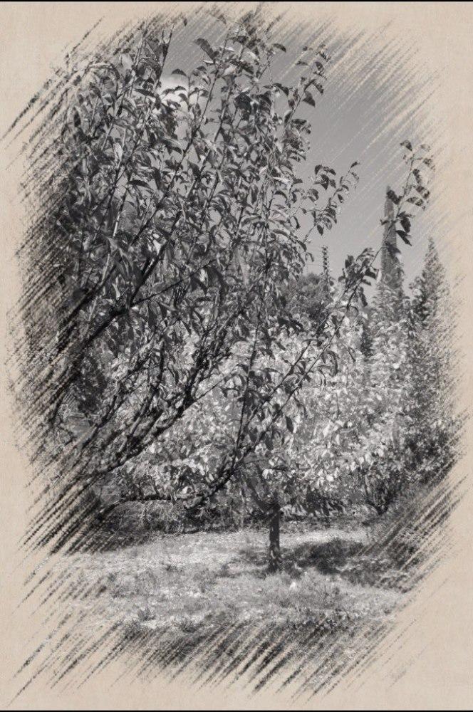 "фото ""***"" метки: пейзаж, черно-белые, digital art,"