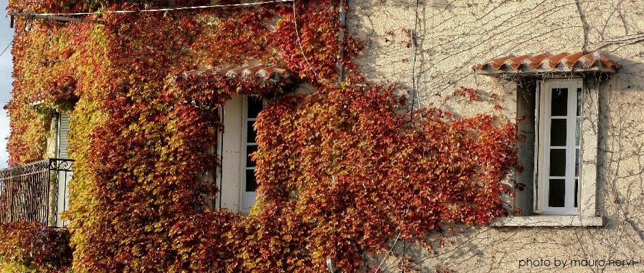 "фото ""autumn is here"" метки: репортаж,"