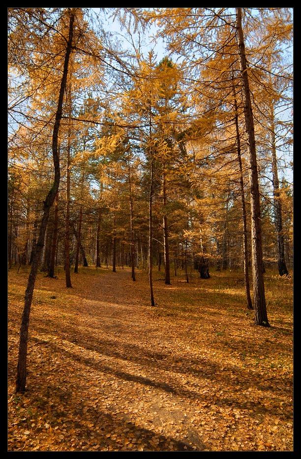 """фото """"Осенний наряд"""" метки: пейзаж, лес, осень"""
