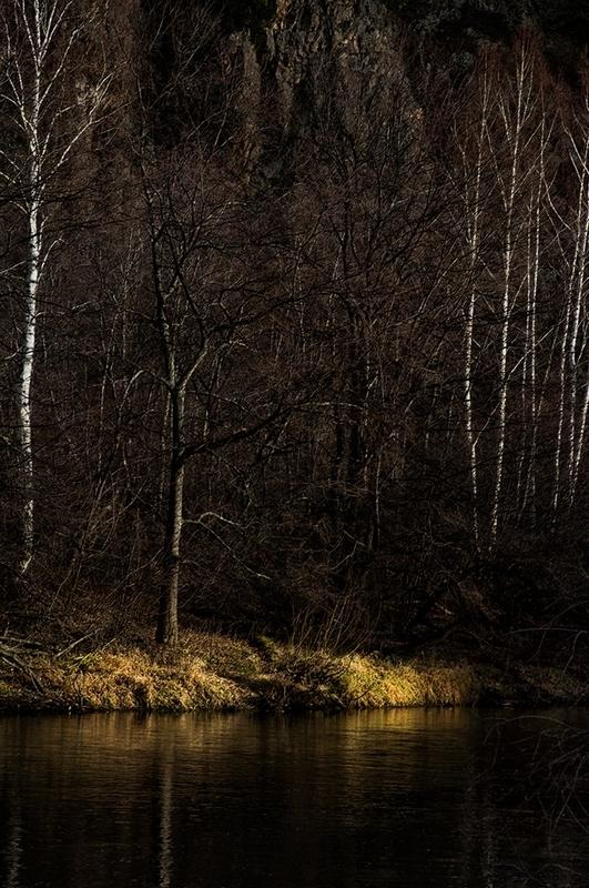 """фото """"***"""" метки: пейзаж, вода, лес"""