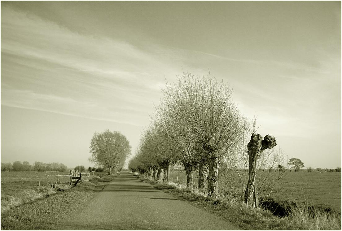 """фото """"По проселочной дороге..."""" метки: черно-белые, дерева, путевыезаметки"""