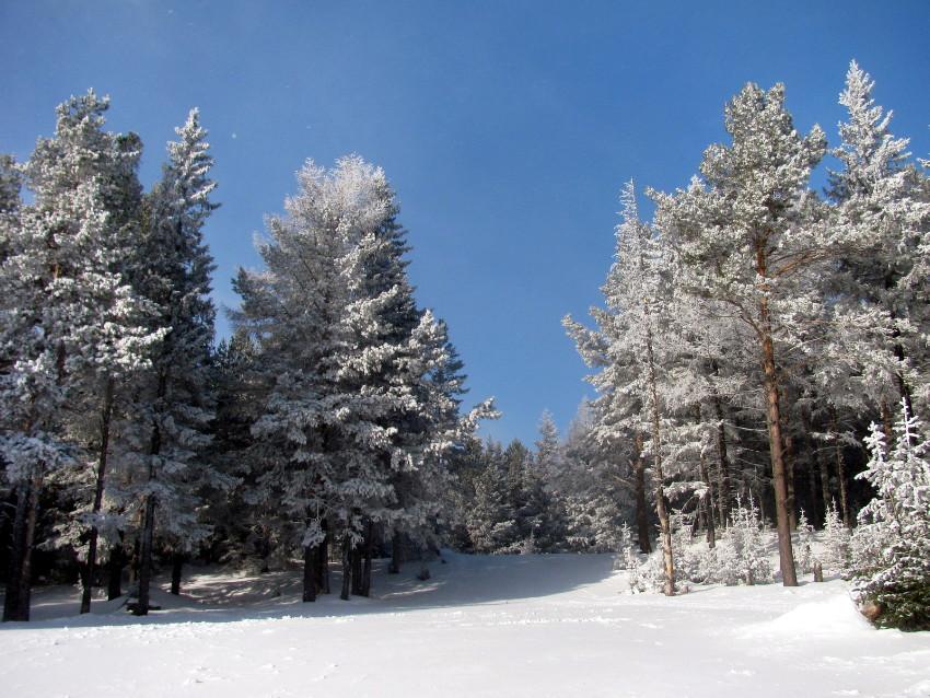 "фото ""В зимнем лесу."" метки: пейзаж, природа, зима, лес, пейзаж."