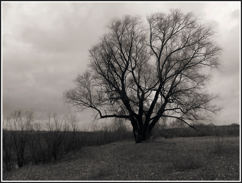 "photo ""Willow"" tags: landscape, black&white,"