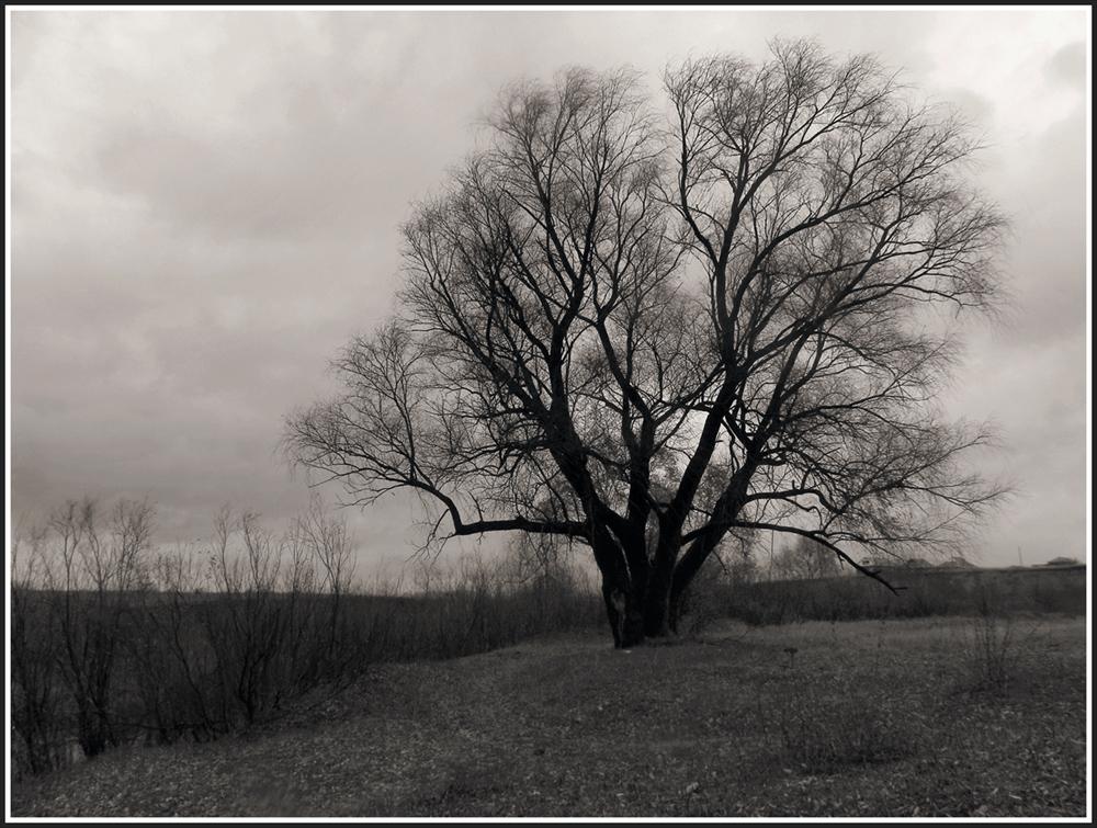 "фото ""Ветла"" метки: пейзаж, черно-белые,"
