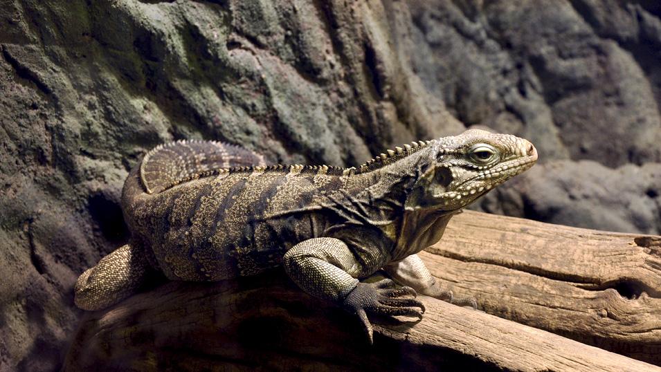 """фото """"мистер Надменность"""" метки: природа, Европа, Прага, дикие животные"""