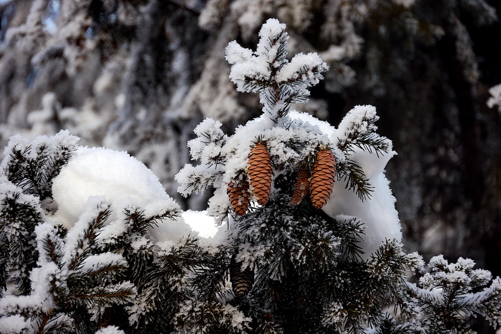 "фото ""Зима пришла"" метки: пейзаж, природа, зима, снег, чудо"