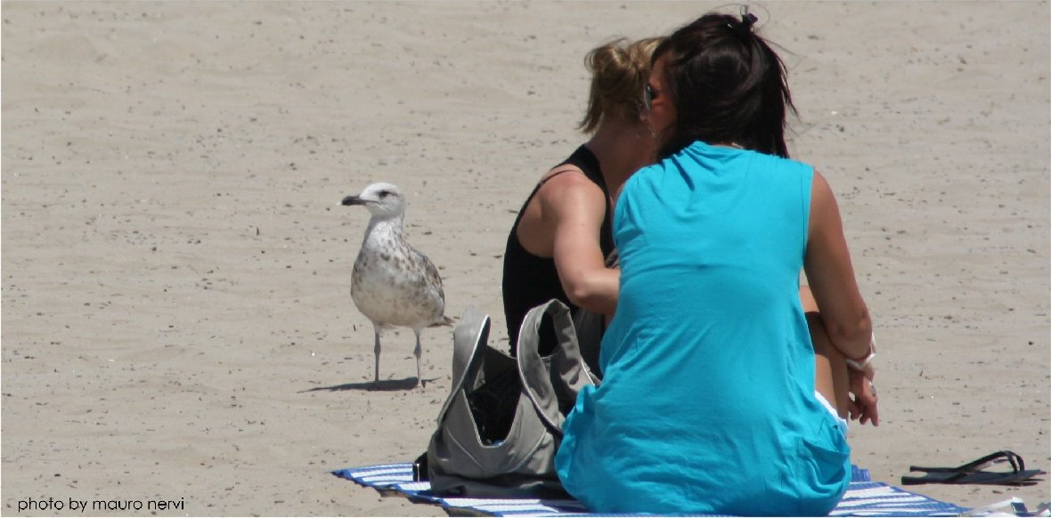 "photo ""a good company on the beach"" tags: reporting,"
