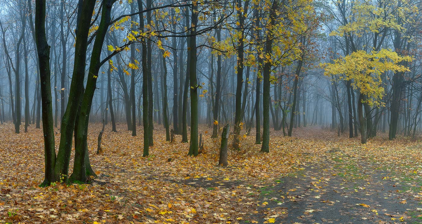 "photo ""***"" tags: landscape, panoramic, autumn, fog, forest"
