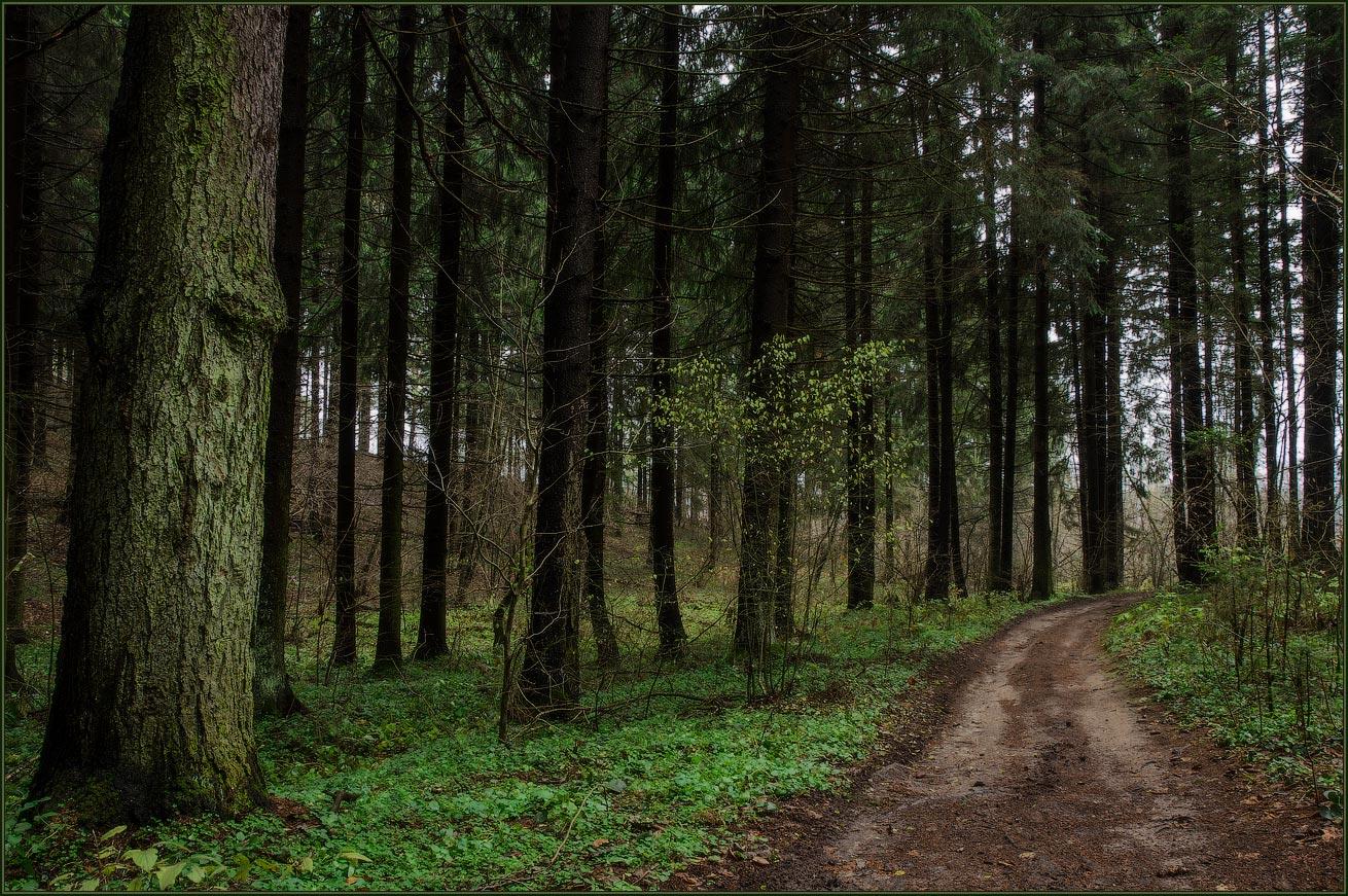 """фото """"В мокром лесу"""" метки: пейзаж, лес"""