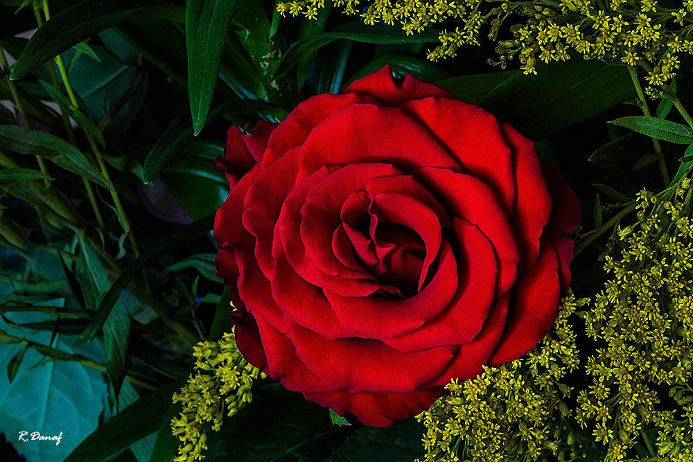 "фото ""RGB"" метки: природа, цветы"