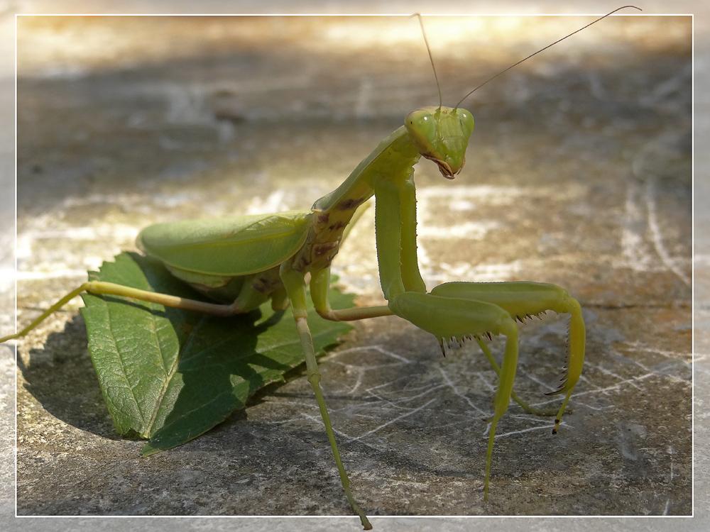 """фото """"Смиренный..."""" метки: природа, насекомое"""