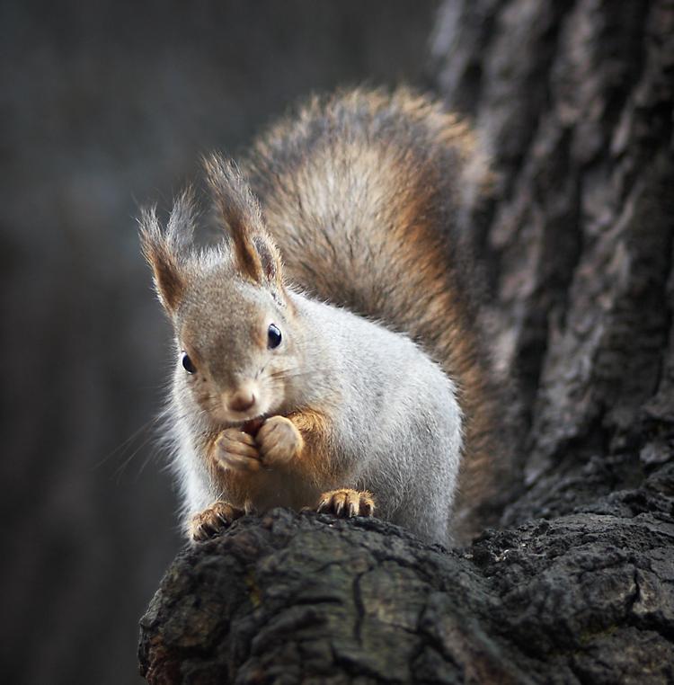 "photo ""***"" tags: nature, portrait, misc., squirrel"