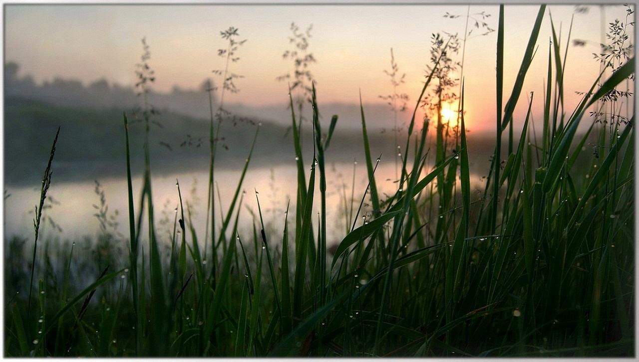 """фото """"Рассвет 22 июня"""" метки: пейзаж, макро и крупный план, природа, лето, рассвет, река, туман"""