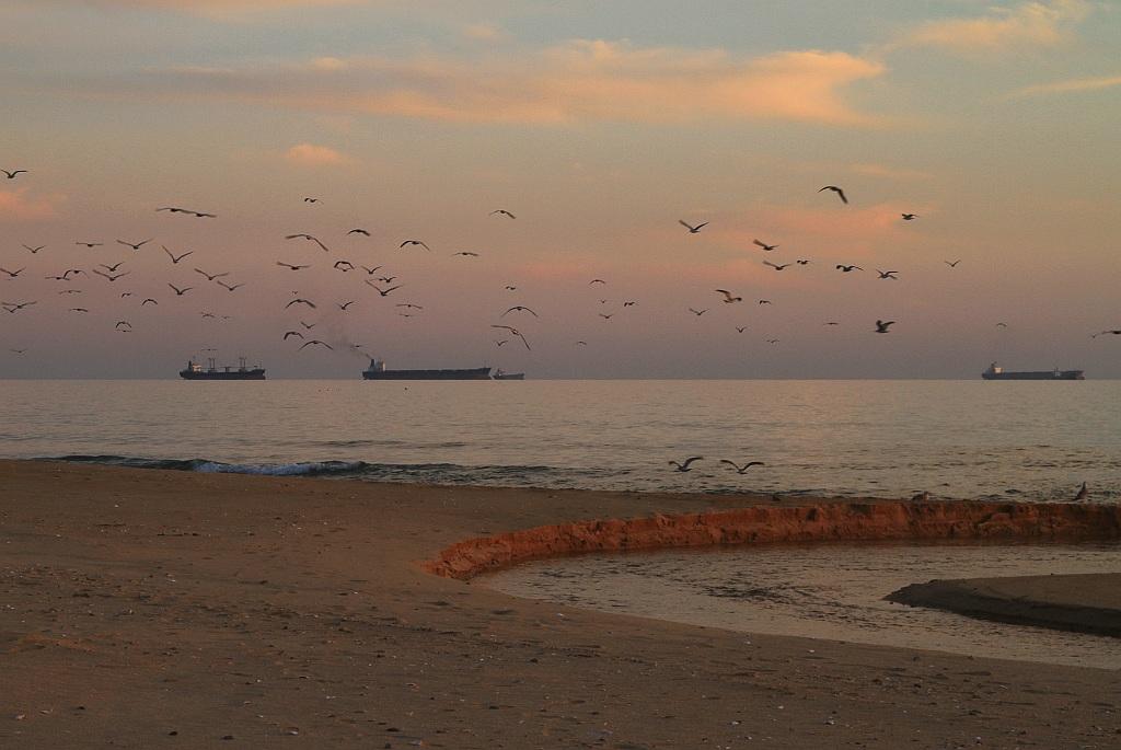 "фото ""Речка, чайки, море, ""параход"""" метки: пейзаж,"
