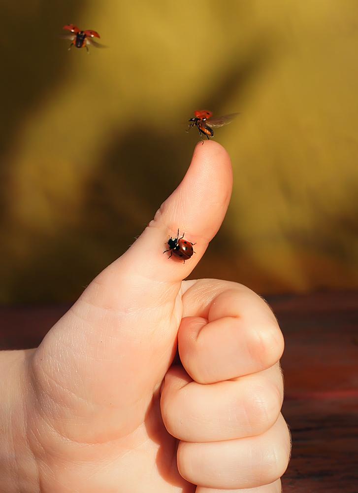 "photo ""божья коровка"" tags: macro and close-up, nature, insect, божья коровка"