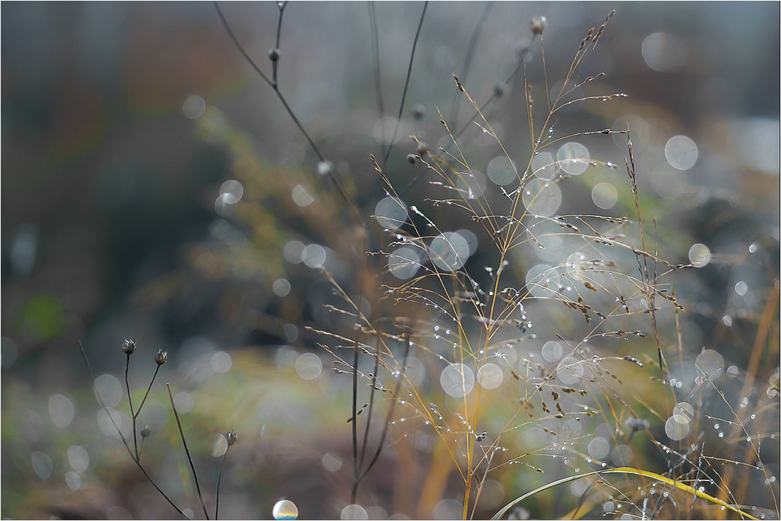 """фото """"Осень. Веточка сладко засыпала..."""" метки: природа,"""