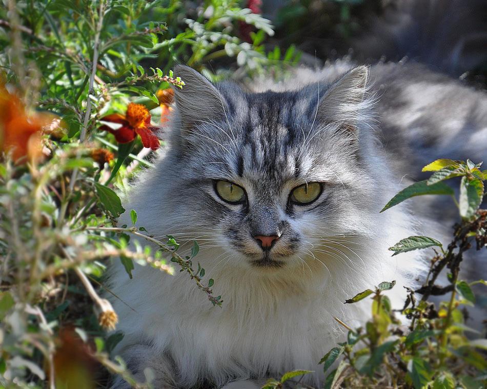"""фото """"Евдокия"""" метки: природа, кошка"""