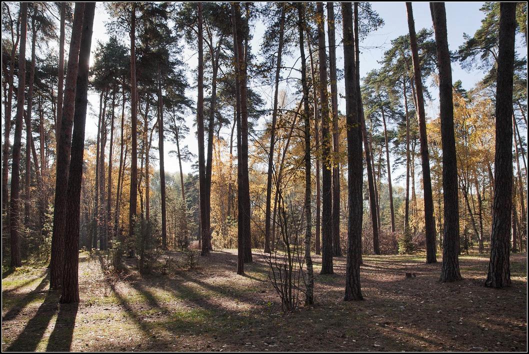 """фото """"осень в контровом свете"""" метки: пейзаж, природа,"""