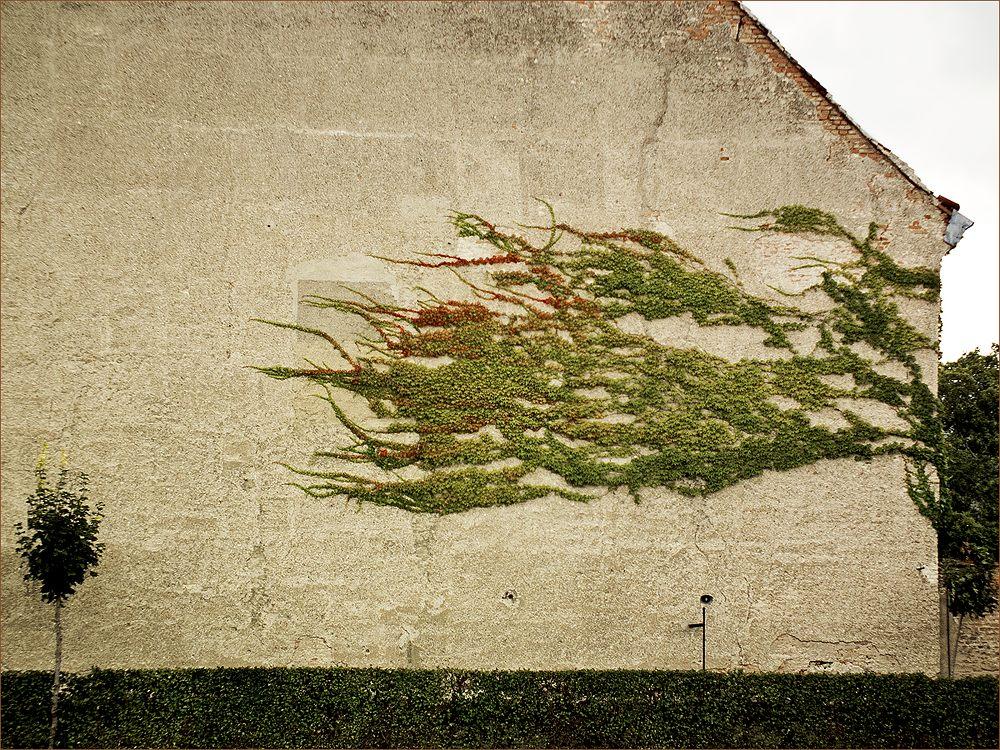 """фото """"Стена"""" метки: абстракция, фрагмент, разное, ivy, wall, плющ, стена"""