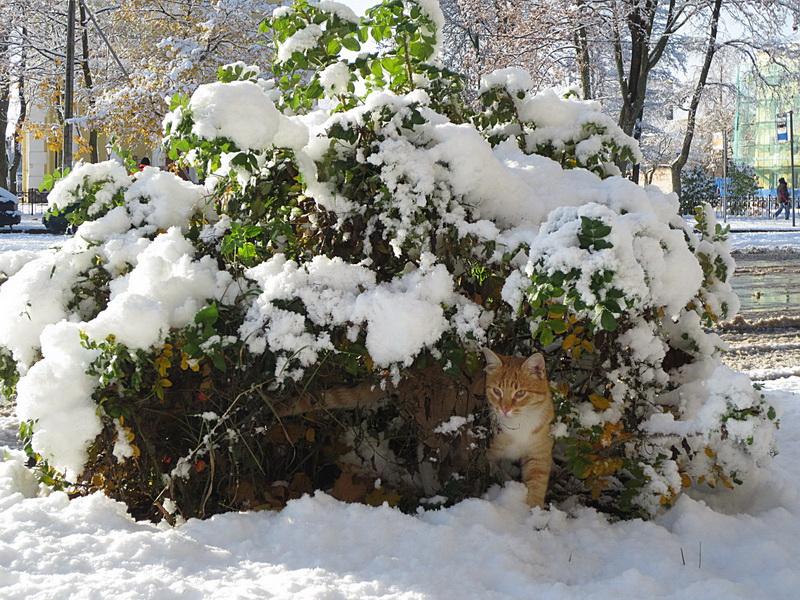 """фото """"первый снег"""" метки: природа,"""