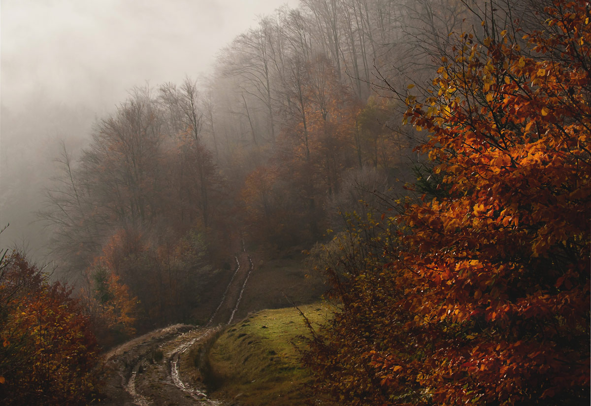 "photo ""***"" tags: landscape, travel, panoramic, autumn, forest, mountains"