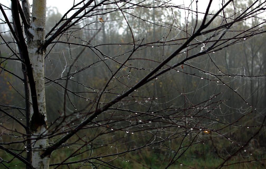 """фото """"Поздняя осень"""" метки: пейзаж, природа, лес, осень"""