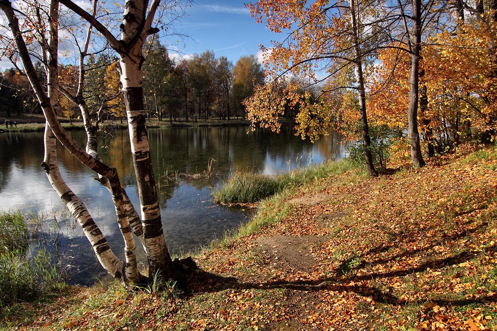 """фото """"***"""" метки: пейзаж, березы, вода, красиво"""