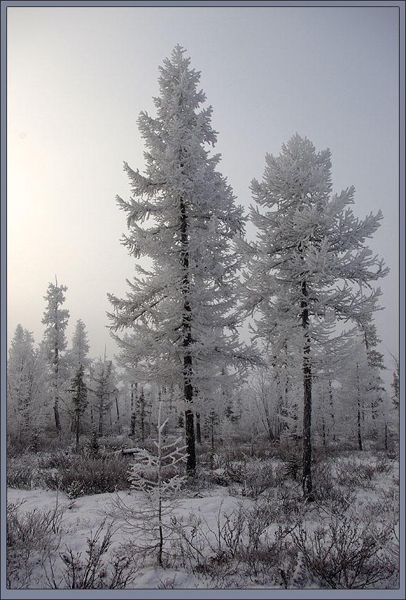 "photo ""***"" tags: landscape, тайга зима иней мороз"