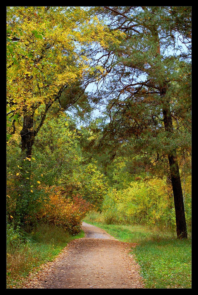 "photo ""Journey in autumn"" tags: landscape, autumn, forest"