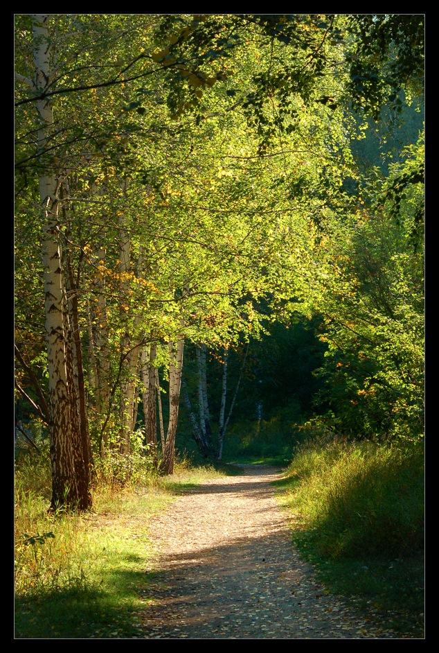 """фото """"Погожий денек"""" метки: пейзаж, лес, лето"""