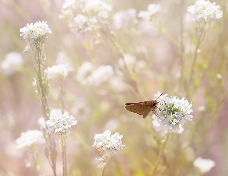 "фото ""Вспоминая лето ..."" метки: природа,"