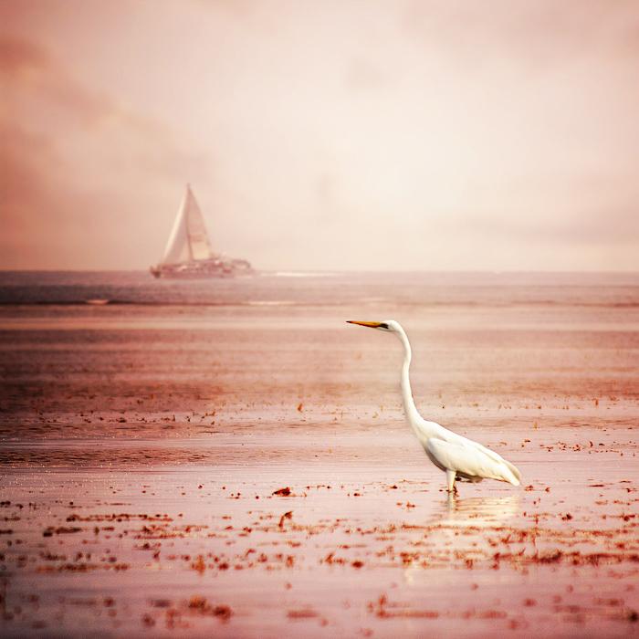 """фото """"Цапля"""" метки: пейзаж, природа,"""