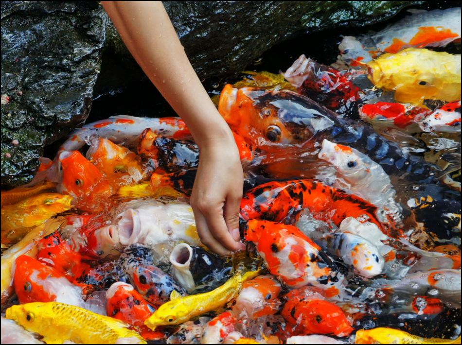 """фото """"Попрошайки."""" метки: , Азия, вода, домашние животные, люди"""