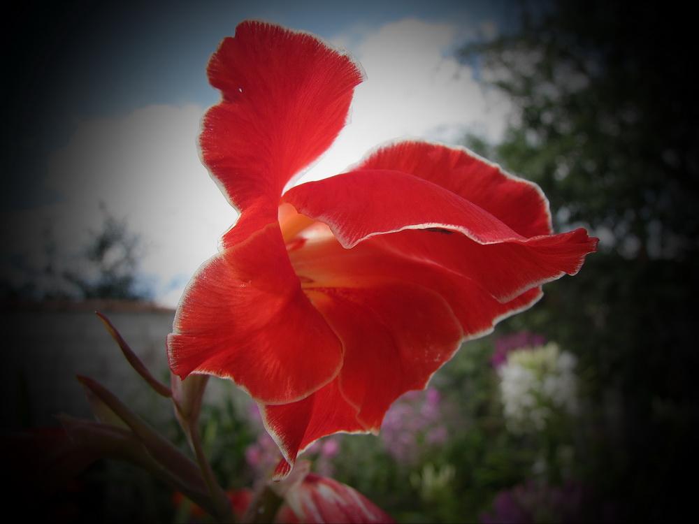 "photo ""Scarlet flash"" tags: landscape, nature,"