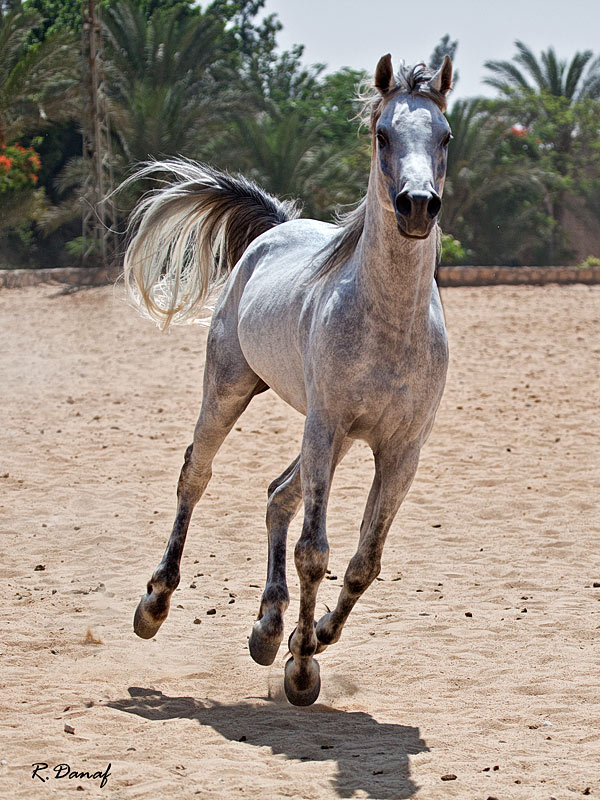 "фото ""Gallop"" метки: природа, Horses"