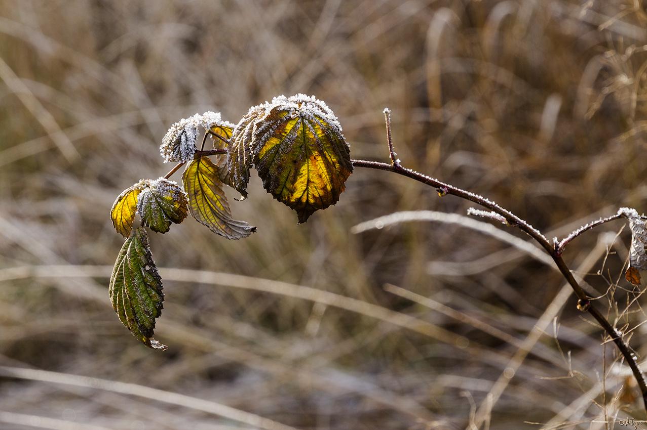 """фото """"Листочки"""" метки: макро и крупный план, осень"""