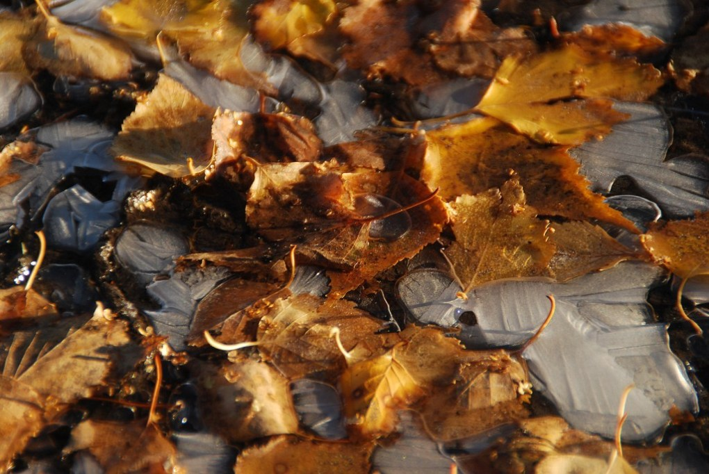 "фото ""***"" метки: разное, лед, листва, осень"