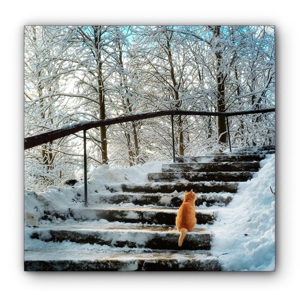 """фото """"***"""" метки: пейзаж, жанр, домашние животные природа пейз"""