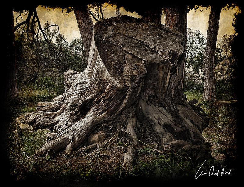 "фото ""***"" метки: пейзаж, разное, лес"