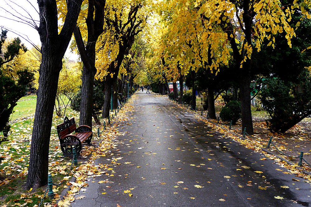 "photo ""Autumn has come"" tags: landscape, city, Bucharest, autumn, fall, leaves, park, romania, yellow"