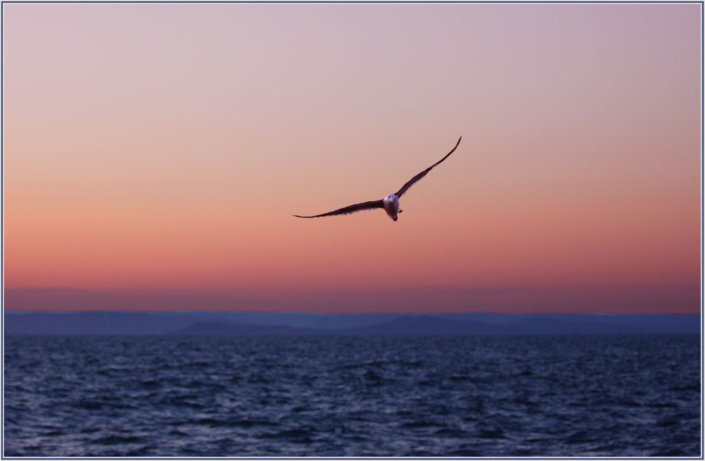 "photo ""***"" tags: nature, landscape, bird, sunset"