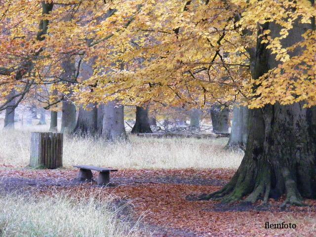 """фото """"Autumn"""" метки: пейзаж, Европа"""