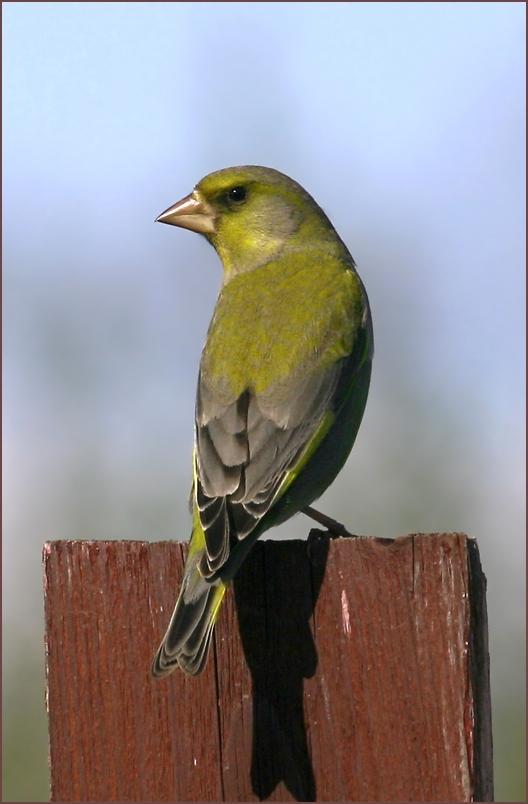 """photo """"***"""" tags: nature, bird"""